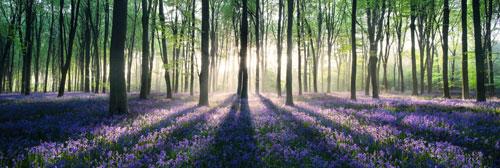 Las pełen Kwiatów i Ziół