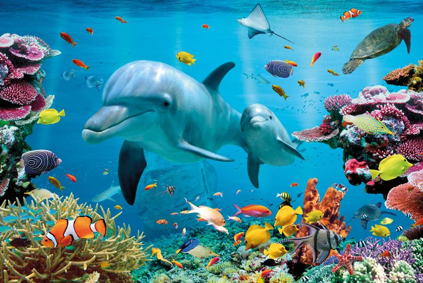 Delfin Rafa Koralowa Tropikalne Morze Plakat
